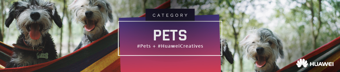 Huawei creatives categories connector 04 01 18 gm pets